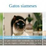 Razas de gatos siameses