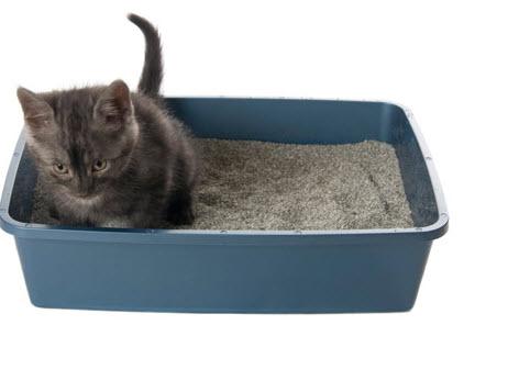 areneros para gatos online