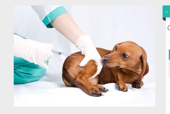vacunas cachorros efectos secundarios