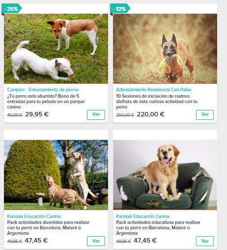 actividades para perros España