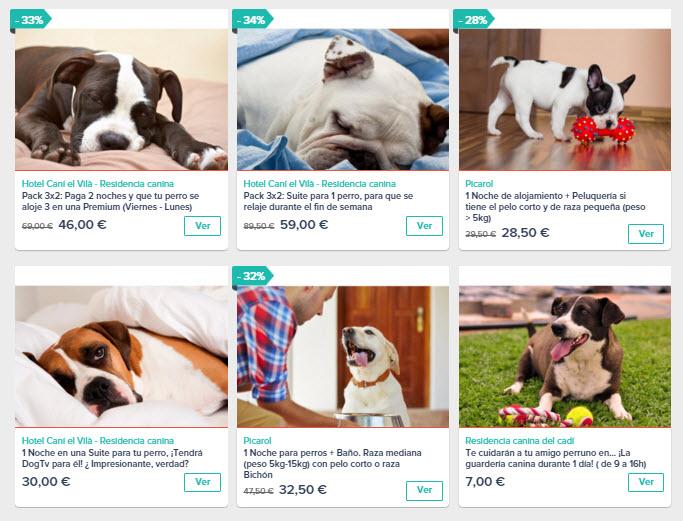servicio hotel para perros España