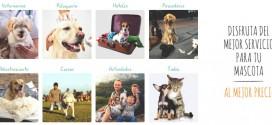 Servicios para perros España: peluquería, hotel y actividades