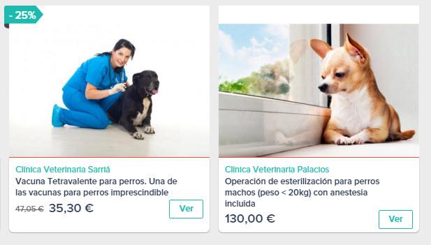 servicios veterinarios para perros España