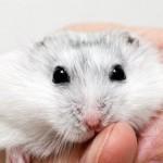 jaulas para hamsters online
