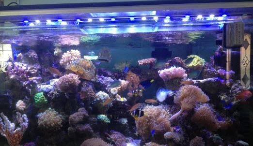 Leds para acuarios baratos y plantados de agua dulce y de for Acuarios baratos