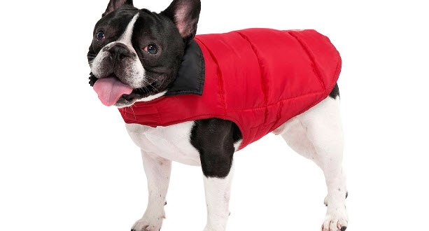 Abrigos para perros grandes y pequeños: online y baratos en Amazon