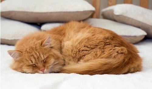 Camas para gatos originales, baratas y de madera online: Amazon