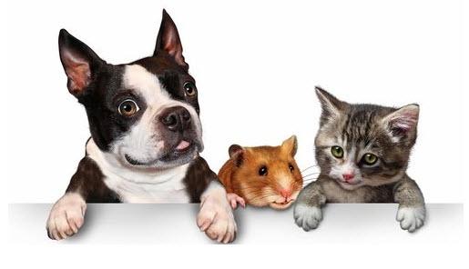 tiendas de animales online