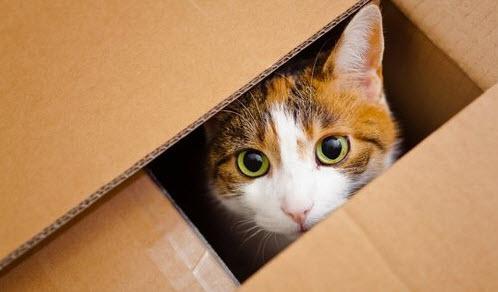 tiendas de gatos online